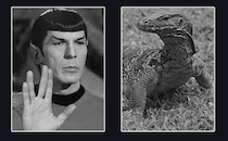 big bang theory version with Spock and Lizard